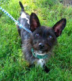 WHMP Dakin Heavy Petting Pet of the Week