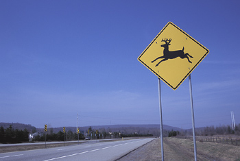 Man Hits Deer On I-91