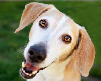 WHMP-Dakin Heavy Petting Pet of the Week