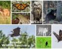 arcadia-wildlife-collage-2_large_landscape (1)
